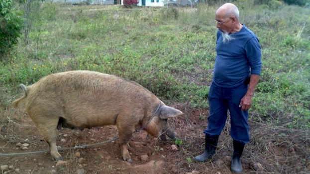 Eduardo Diaz Fleitas on his farm.  (14ymedio)