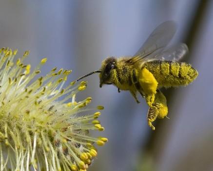 Cuento abejas trabajadoras sexual harassment