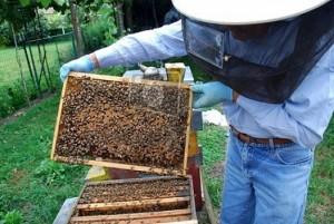 abejas-3