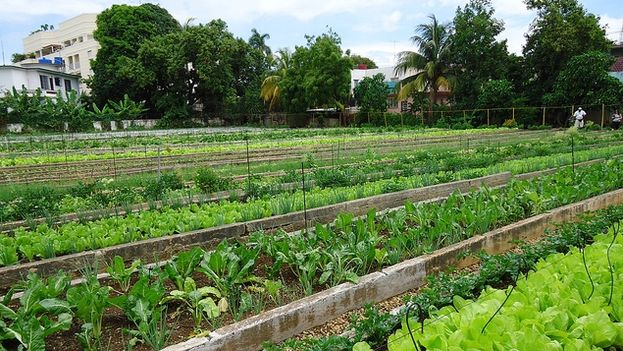 Urban organic garden in Miramar, Havana (flickr)