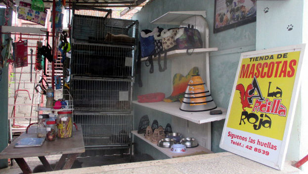Red Squirrel Pet Store is the result of the initiative of a private entrepreneur. (Fernando Donate / 14ymedio)