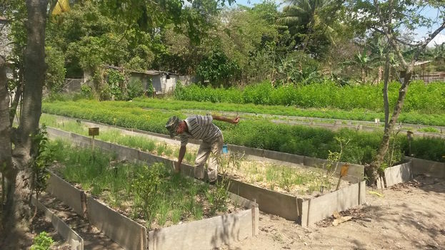 The garden with herbs being grown for Purita Industries. (14ymedio)