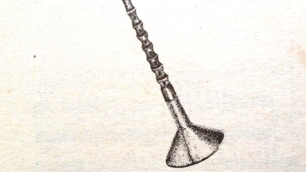 Chinese Horn