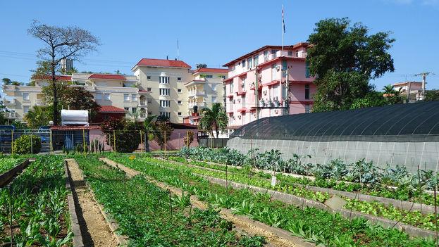 Urban agriculture in Havana (flickr)