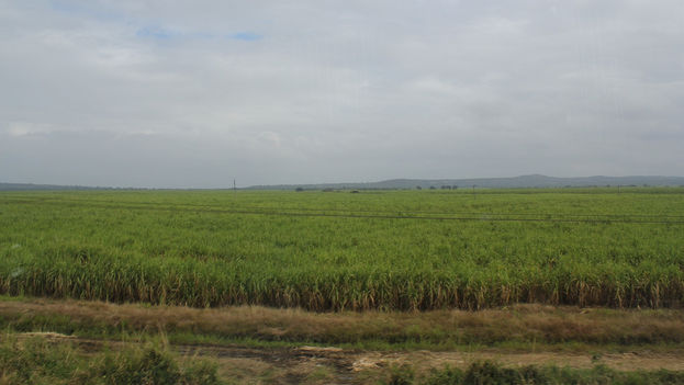 A sugar cane field in Cuba. (Flickr / CC)