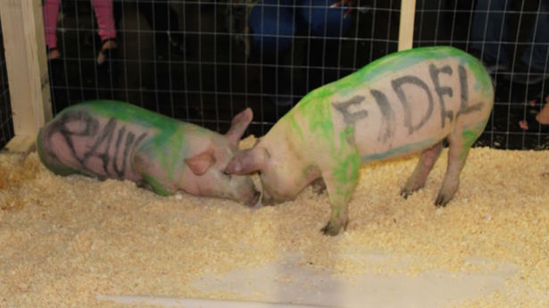 Outstanding among the pieces at the Market gallery in Miami Beach, the 'performance' art that cost Maldonado ten months in prison in a Havana park two pigs with the names Fidel and Raul painted on their sides.