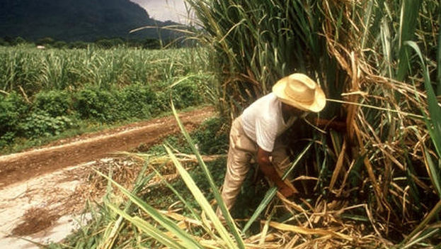 The sugar harvest in Villa Clara will not reach 2016 levels (CC)